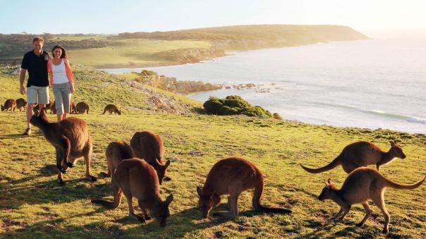 bk-kangarooisland