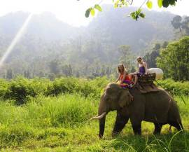 river kwai elephant