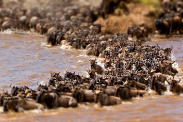 10-Day-Great-Wildebeest-Migration-Tracking
