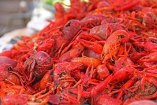 crawfish-169694