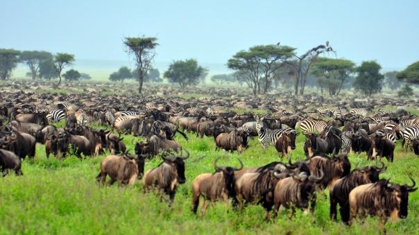 The-Great-Migration-at-Serengeti-National-Park-Tanzania