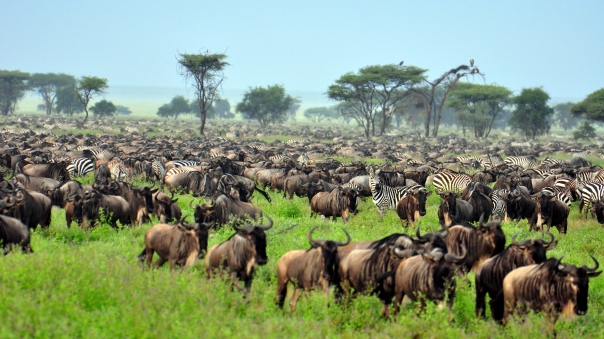 The-Great-Migration-at-Serengeti-National-Park-Tanzania
