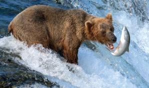 tvmarvel bear