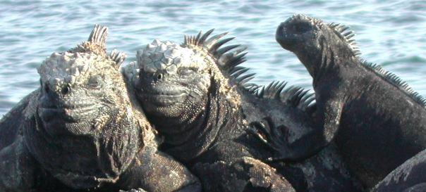 Galapagos-Islands_DX-News_HC8A