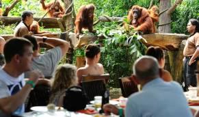Zoo Breakfast