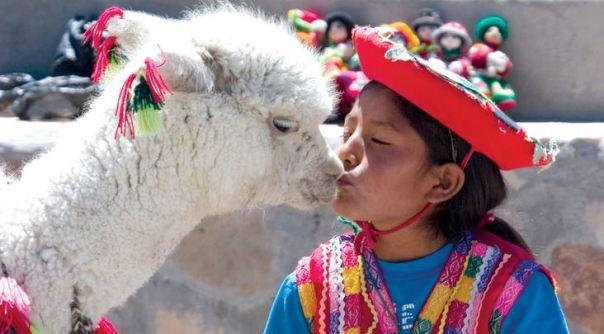 kissing-llama