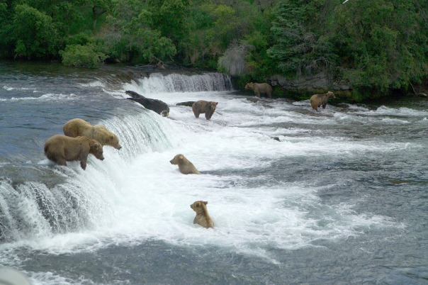 brown-bears-2119560_1920