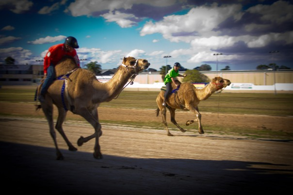 BBX Camel races (357 of 1)