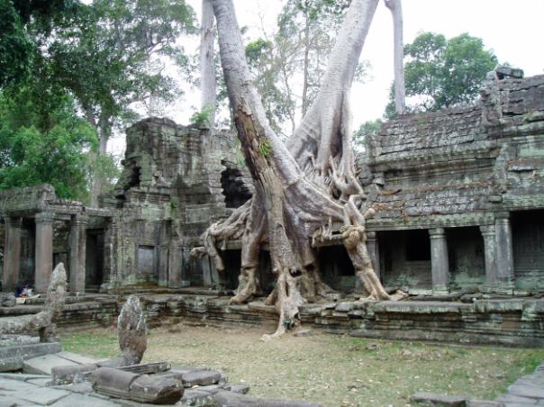 overgrown-buildings-angkor-complex-siem-reap